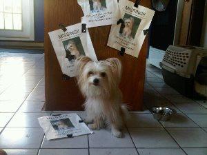 Roxie Missing