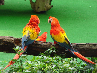 Parrots, Salespeople,